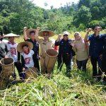 Berpola Agroforestry Kemitraan, 15 Ton Padi Dipanen Perdana