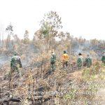 Satgas Karhutla  Sumsel Berhasil Padamkan Api di Ruas Tol Palindra