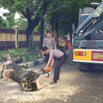 Patut Diapresiasi Gerak Cepat Patroli Dit Samapta Polda Sulsel Saat Evakuasi Pohon Tumbang