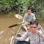 Kasat binmas bersama Instansi Pemerintah terkait Dan warga evakuasi Bangkai babi Yang mengapung di pinggir Sungai selat tanjung Medan