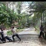 *Antisipasi Adanya korban karena pohon Pohon membahayakan, SAR Yon C Pelopor Sigap eksekusi 2 pohon Dijalan Gunung kinibalu*