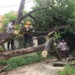 "Brimob Yon C Pelopor  bersama BPBD kabupaten Bone Sigap evakuasi pohon tumbang ""TINDIZZ"" Pagar Rumah warga di Jalan Sungai Limboto,"
