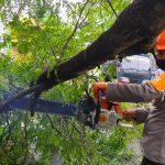 """""""Quick Respond"""" SAR Batalyon C Pelopor Evakuasi Pohon Tumbang di Jalan Gunung Kinibalu"""