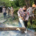 Akibat Hujan disertai Angin kencang , puluhan Pohon tumbang di kota  , Komandan Tindizz pimpin langsung Team Evakuasi SAR Yon C Pelopor